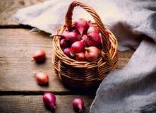 Pearl onion Stock Image
