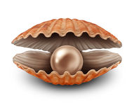 Pearl In Open Shell Royalty Free Stock Photo