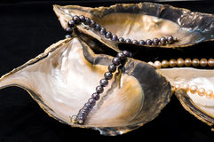 Pearl oyster Royalty Free Stock Photography