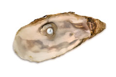Pearl oyster. A pearl oyster on a white background insulated Stock Photos