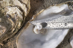 Pearl oyster and blade. Close up about a wet blade that detaches a pearl oyster Royalty Free Stock Image