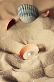 Pearl pearl in the shell on the beach Stock Image