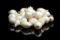Pearl pickling onion Royalty Free Stock Photos