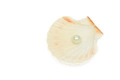 Pearl in sea shell Royalty Free Stock Images