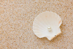 Pearl in sea shell Royalty Free Stock Image