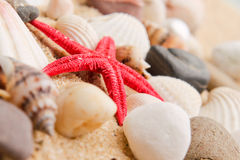 Pearl on the seashell . Stock Images