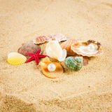 Pearl on the seashell . The exotic sea shell . Treasure from the Stock Photos