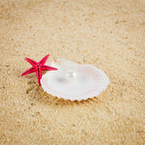 Pearl on the seashell . The exotic sea shell . Treasure from the Royalty Free Stock Image
