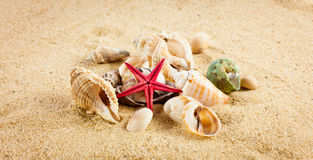 Pearl on the seashell . The exotic sea shell . Treasure from the Royalty Free Stock Images