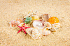 Pearl on the seashell . The exotic sea shell . Treasure from the Royalty Free Stock Photo