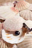 Pearl on the seashell Royalty Free Stock Images