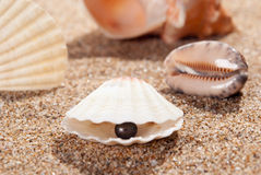 Pearl on the seashell Stock Photography