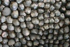 pearl seashell matki zdjęcie royalty free