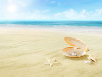 Pearl in seashell. Royalty Free Stock Images