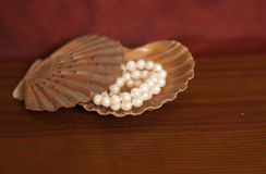 Pearl and seashell Stock Images
