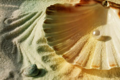 Pearl in the seashell Stock Images