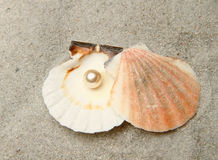 Pearl in shell Stock Photos