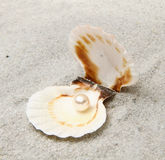Pearl in shell Royalty Free Stock Photo