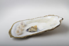 Pearl on shell Royalty Free Stock Photos