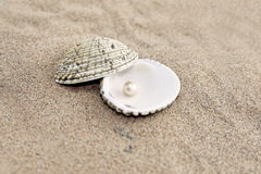 Pearl in shell Royalty Free Stock Images