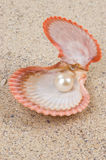 Pearl in shell Royalty Free Stock Photos