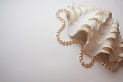 Pearl Shell Royalty Free Stock Image