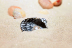 Pearl in the shell on the beach Stock Photography