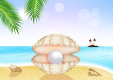 Pearl in the shell Royalty Free Stock Image