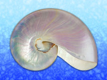 Pearl shell of a nautilus. Detailed photo of a pearl shell of a nautilus (Nautilus pompilius) on marine background Royalty Free Stock Images