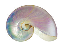 Pearl shell of a nautilus. Royalty Free Stock Images