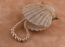 Pearl with a shell Royalty Free Stock Photography