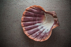 Pearl Shell On Bright Background Royalty Free Stock Photography