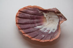 Pearl shell Royalty Free Stock Photography