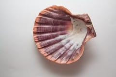 Pearl shell Stock Photo