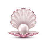 Pearl in the shell Stock Photography
