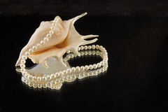 Pearl and shell Royalty Free Stock Photography