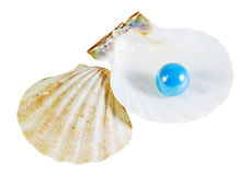 Pearl and shells Stock Image