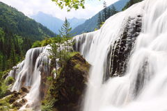 Pearl shoal waterfall jiuzhai valley summer. The Pearl shoal waterfall(Zhenzhutan) waterfall in Jiuzhai Valley of Sichuan, China Royalty Free Stock Image