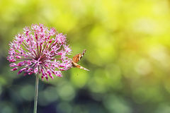 Pearl spotted a butterfly sitting on a beautiful decorative flower. Bow stock photos