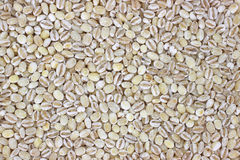 Pearled barley Royalty Free Stock Photography