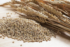 Pearled Barley Stock Image