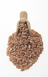 Pearled spelt with a small wooden spoon. Royalty Free Stock Image