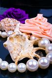 pearls раковина роз Стоковые Фото