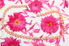 Pearls. There are Pearls in flowers Stock Photos