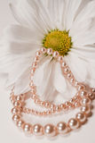 Pearls Adorned Royalty Free Stock Photography