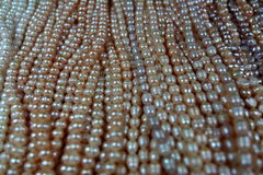Pearls background composition Stock Image