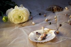 Pearls in the cockle-shell Stock Photos