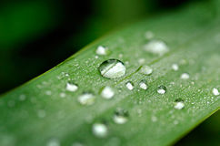 Pearls of dew Stock Images
