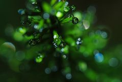 Pearls of dew Royalty Free Stock Images