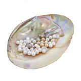Pearls in mother of pearl Stock Images